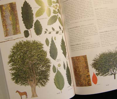 Trees Of Britain & Northern Europe - Special Edition